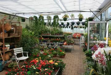 Plantes et fleurs d'interieur