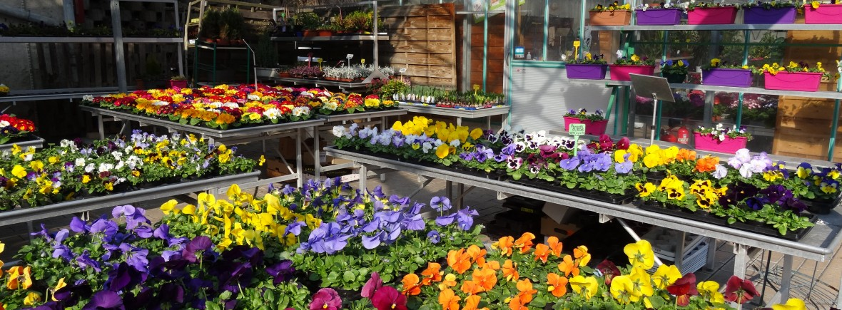 Plantes et fleurs d'extérieur