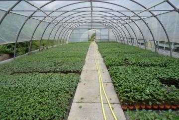 Tunnel légume - plant potager
